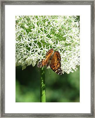 Framed Print featuring the photograph Butterfly Floral  by Rebecca Overton
