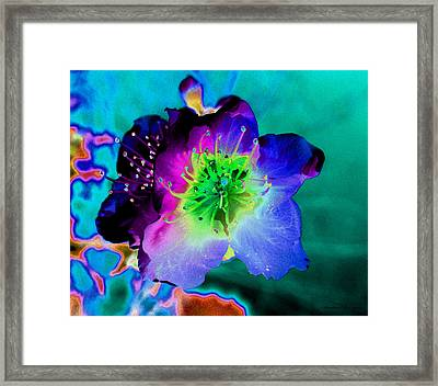 Butterfly Flower Framed Print