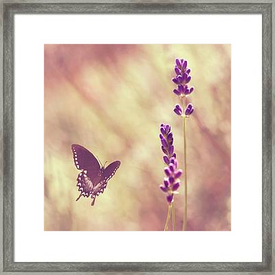Butterfly Flying Towards Lavender Framed Print by Jody Trappe Photography