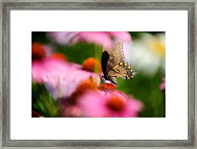 Butterfly Framed Print by Frank DiGiovanni