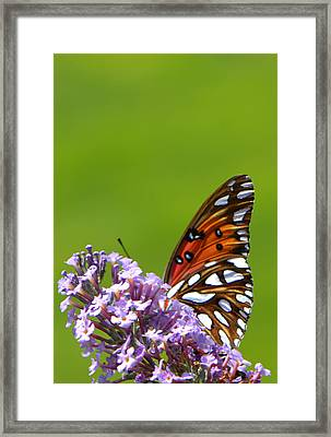 Framed Print featuring the photograph Butterfly From Below by George Bostian