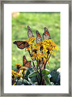 Butterfly Garden Framed Print By Beckie Amidon Austin