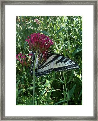 Framed Print featuring the photograph Butterfly Garden by Jeremiah Colley