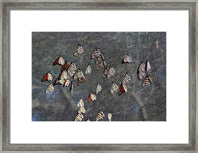 Framed Print featuring the photograph Butterfly Gathering by Tam Ryan