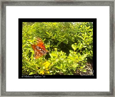 Butterfly In Action Framed Print