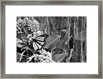 Butterfly In Black Framed Print by Helen Haw