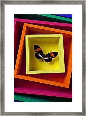 Butterfly In Box Framed Print by Garry Gay