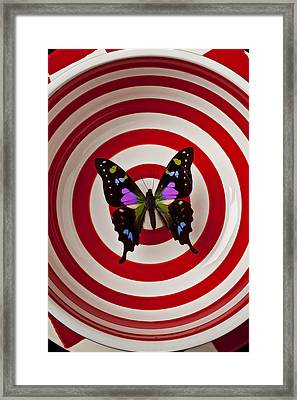Butterfly In Circle Bowl Framed Print by Garry Gay