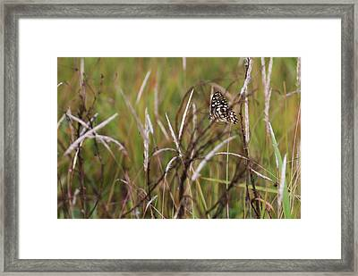 Framed Print featuring the photograph Butterfly In Flight by Fotosas Photography