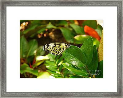 Butterfly In Yellow And Black Framed Print
