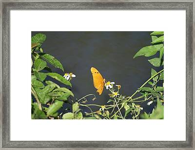 Framed Print featuring the photograph Butterfly by Jerry Cahill