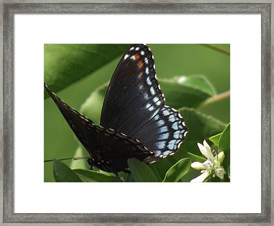 Butterfly Framed Print by Katherine Woods
