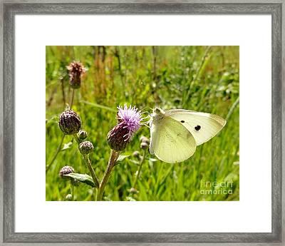 Butterfly Kisses Framed Print by Elizabeth Hernandez