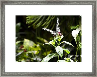 Butterfly Kisses Framed Print by Leslie Leda