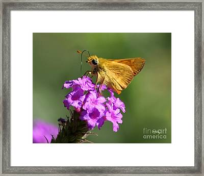 Butterfly Kisses Framed Print by Patrick Witz