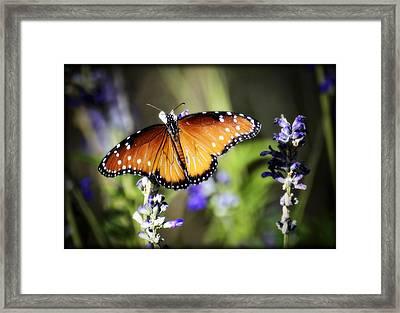 Butterfly Kisses Framed Print
