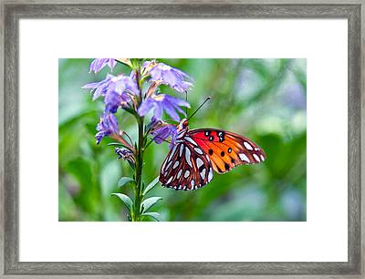 Butterfly Framed Print by Linda Pulvermacher