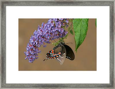 Butterfly Looking Up Framed Print by Daamonturne