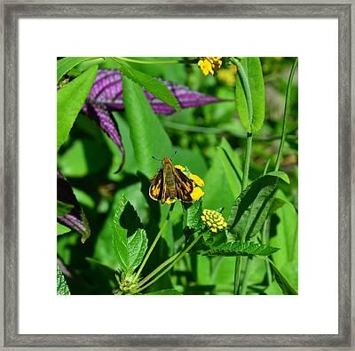 Butterfly Framed Print by Mark Bowmer