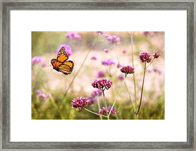 Butterfly - Monarach - The Sweet Life Framed Print by Mike Savad