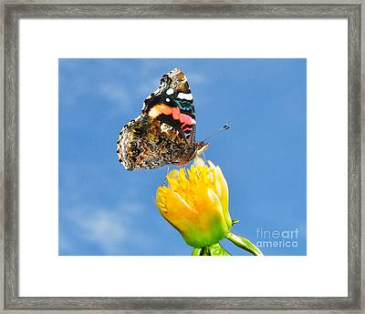 Framed Print featuring the photograph Butterfly N Flower by Jack Moskovita