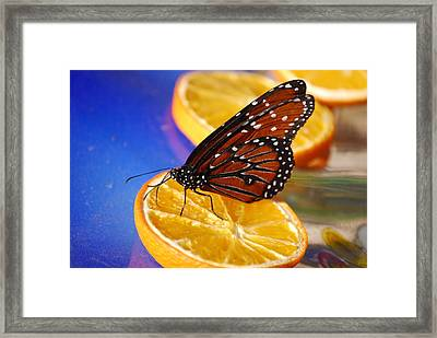 Framed Print featuring the photograph Butterfly Nectar by Tam Ryan