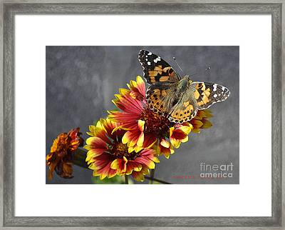Framed Print featuring the photograph Butterfly On A Gaillardia by Verana Stark