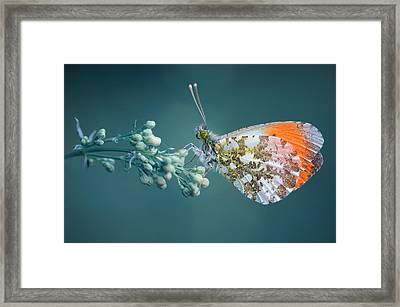 Butterfly On Blue Background Framed Print