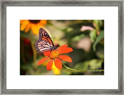 Butterfly On Flower 1 Framed Print by Artie Wallace