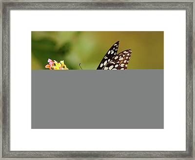 Butterfly On Flower Framed Print