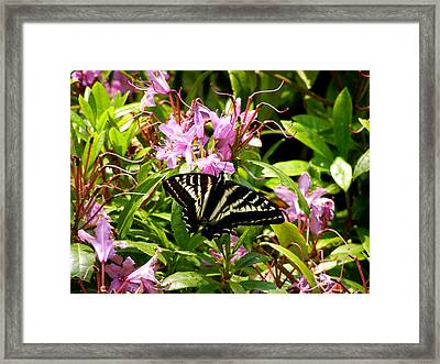 Butterfly On Flowers Framed Print by Mark Caldwell