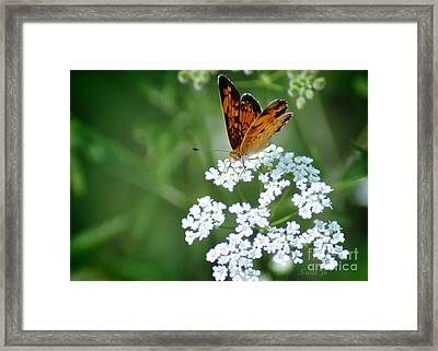 Butterfly On Lacy Wildflower Framed Print by Nava Thompson