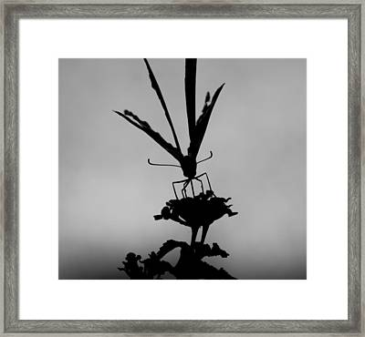Butterfly On Lantana Bw Framed Print