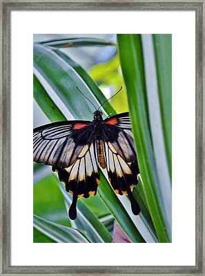 Framed Print featuring the photograph Butterfly On Leaf by Werner Lehmann