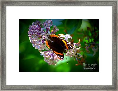 Butterfly On Lilac Framed Print