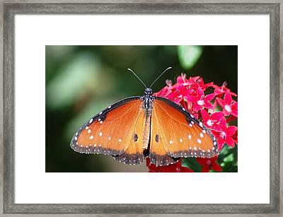 Butterfly On Pink Flower Framed Print by Meeli Sonn