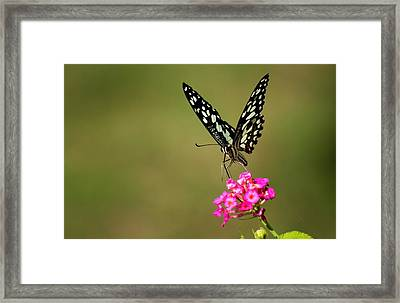 Framed Print featuring the digital art Butterfly On Pink Flower  by Ramabhadran Thirupattur