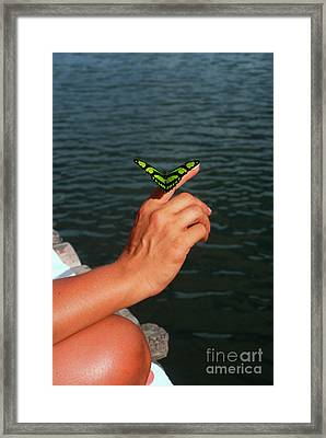 Butterfly On Woman's Hand Framed Print by Thomas R Fletcher
