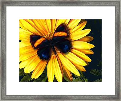 Butterfly On Yellow Framed Print by Virginia Palomeque
