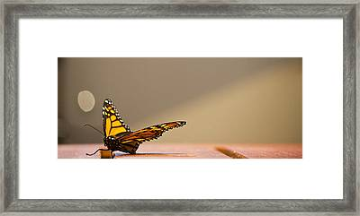 Butterfly Framed Print by Paul Robb