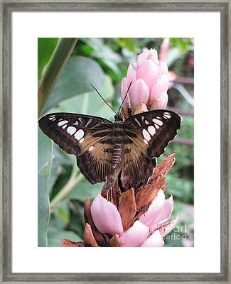 Butterfly Pavilion1 Framed Print by Michelle H
