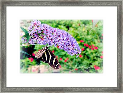 Butterfly Plant Framed Print by Debbie Sikes