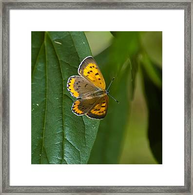 Butterfly Pose Framed Print