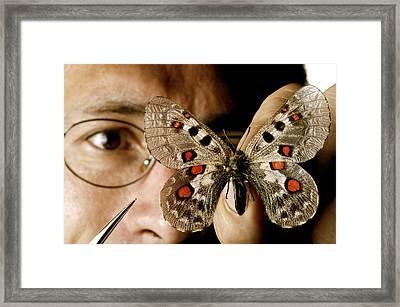 Butterfly Preparation Framed Print by Mauro Fermariello