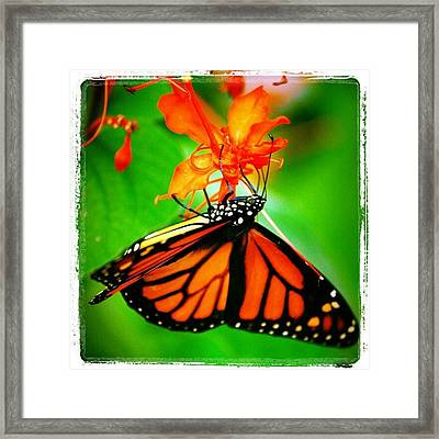#butterfly #pretty #colorful Framed Print