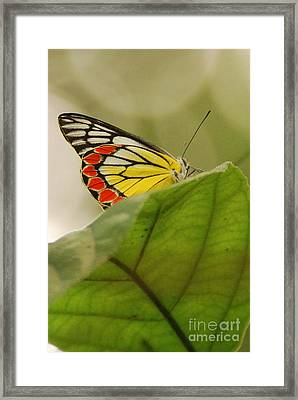 Framed Print featuring the photograph Butterfly Resting by Fotosas Photography