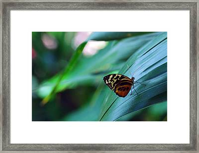 Butterfly Resting Framed Print by Luis Esteves