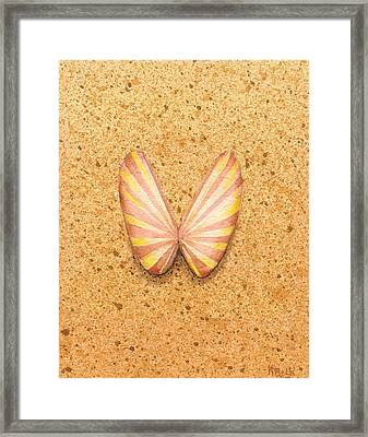 Butterfly Sea Shell Framed Print