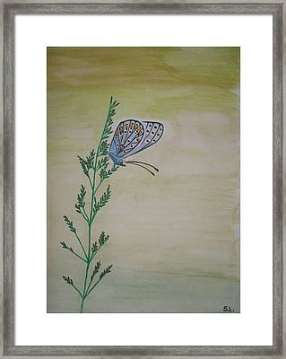 Butterfly Framed Print by Silvia Louro