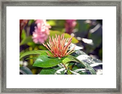 Butterfly Snack Framed Print